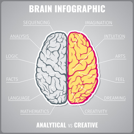 intuitive: Brain left analytical and right creative infographic concept. Art feel dreaming mathematics language facts logic sequential and intuitive. Vector illustration Illustration