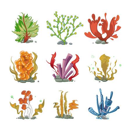 algas marinas: plantas bajo el agua en el vector de estilo de dibujos animados. vida del océano, el mar bajo el agua, la naturaleza algas ilustración Vectores