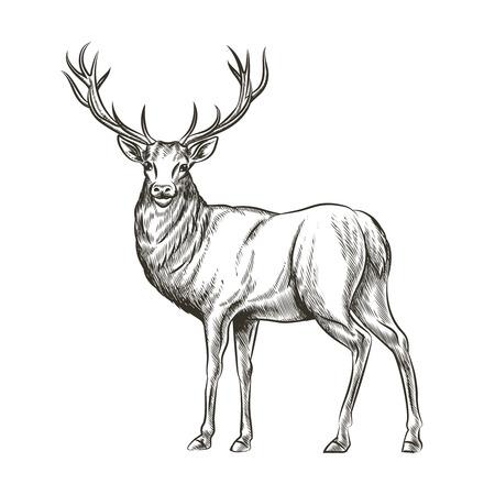 Main cerfs tirés. Animal sauvage, de la corne et de la faune de la nature, mammifère renne, cornes à cornes, croquis illustration vectorielle