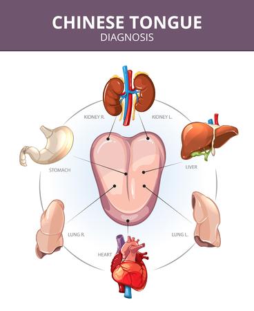 Chiński Diagnoza Tongue. narządy wewnętrzne prognozy. Żołądka i płuc, wątroby i narządów wewnętrznych, serce i nerki ilustracji. infografiki wektorowej Medyczna Ilustracje wektorowe
