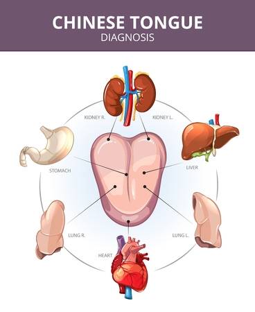 Chinese Tongue Diagnosis. Inwendige organen projecties. Maag en longen, lever en orgel interne, hart en nieren illustratie. Medical vector infographics
