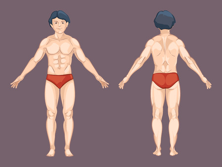 boy  naked: Man body in front and back pose.  Male human, front anatomy, athletic naked. Vector illustration in cartoon style
