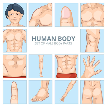 human body: Male body parts in cartoon style. Human chest, knee and abdomen, foot and hand, buttocks ass, finger and phalange. Vector illustration icons set