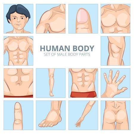 nalga: Partes del cuerpo masculino en el estilo de dibujos animados. Pecho humano, la rodilla y el abdomen, pies y manos, nalgas culo, dedo y falange. Ilustración del vector iconos conjunto