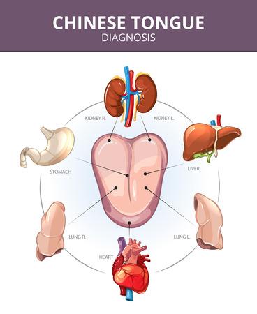 Chinese Tongue Diagnosis. Inwendige organen projecties. Maag en longen, lever en orgel interne, hart en nieren illustratie. Medical vector infographics