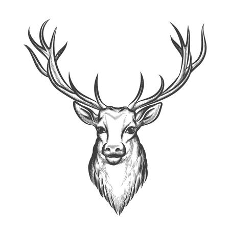 mammal: Hand drawn deer head. Wild animal with horn, mammal reindeer tattoo. Vector illustration
