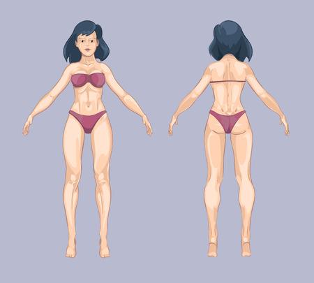 modelo desnuda: Mujer o cuerpo de la mujer en el estilo de dibujos animados. Frente y de pie Actitud posterior. Señora de la belleza, persona modelo adulto, ropa interior de moda del bikini. ilustración vectorial