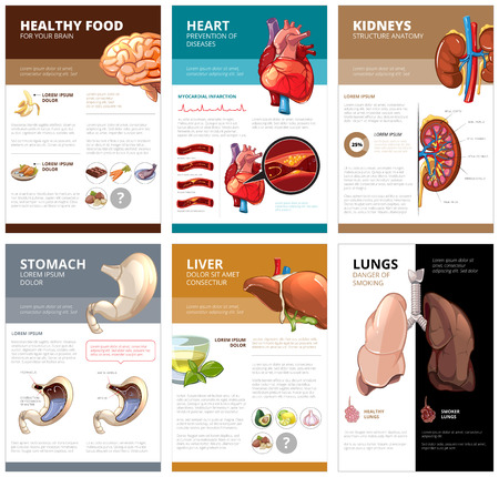 a structure: Internal human organs chart diagram infographic. Brain and heart, liver and stomach, lung and kidney, health medical science. Vector illustration brochure template