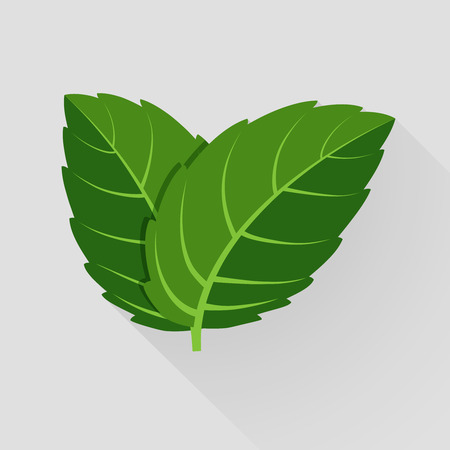 민트 벡터 나뭇잎. 식물 민트, 녹색 잎 민트, 유기 및 신선한 민트 그림