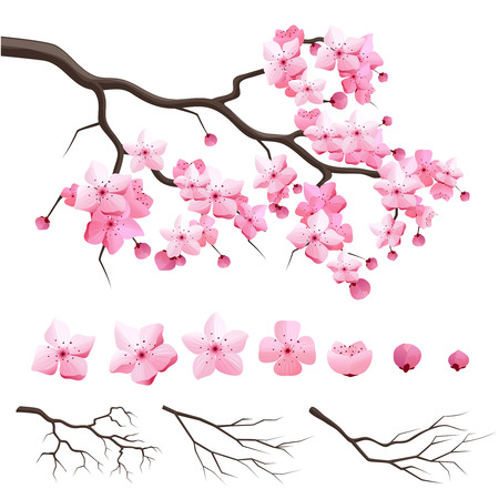 cherry: Vector japan sakura cherry branch with blooming flowers. Design constructor with blooming cherry branch