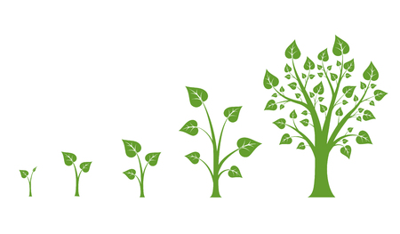 Tree growth vector diagram. Green tree growth, nature leaf growth, plant growh illustration