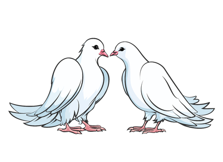 romantic couples: Kissing couple of doves. Dove couple, love dove bird, kiss pigeon, valentine dove wedding, vector illustration Illustration