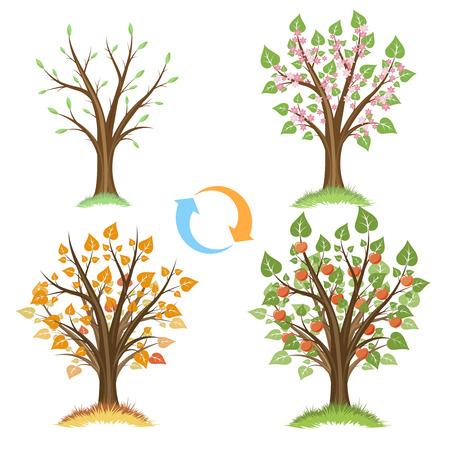 estaciones del a�o: manzano ciclo estacional. cubo estaci�n, manzana planta, natural de ciclo, jard�n de la manzana, el crecimiento de manzana fruta, ilustraci�n vectorial