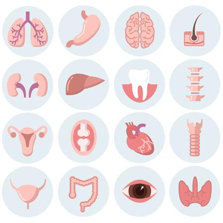 Human organs flat icons vector set. Organ anatomy set, health human organ, brain organ, medicine internal organ, heart and liver, lung and eye illustration Illustration