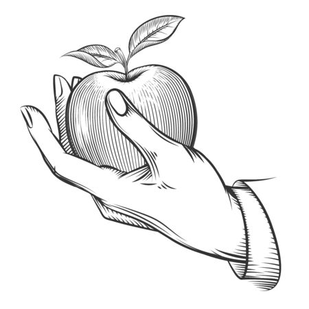 apple leaf: Human hand with apple drawn in engraving style. Apple fruit, nature, food apple fresh, engraving apple with leaf, vintage sketch organic, apple. Vector illustration