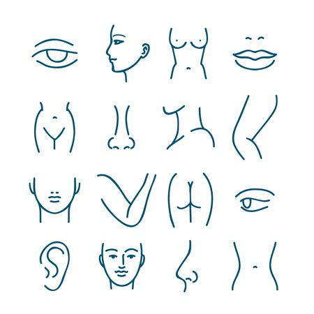 plastics: Human body parts vector line icons for plastic surgery or cosmetic surgery. Anatomy plastic surgery, face and eye plastic surgery, mouth and lip plastic surgery illustration