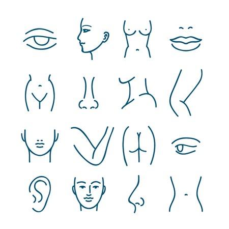 Partes del cuerpo vector de iconos de líneas humanos para la cirugía plástica o cirugía estética. Anatomía de la cirugía plástica, cirugía plástica cara y los ojos, la boca y los labios de la ilustración de la cirugía plástica Ilustración de vector