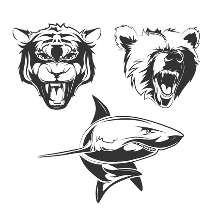 predators: Vector elements for sport team labels with  grizzly, shark and tiger. Animal predator, tiger tattoo animal, wild bear animal tattoo, ocean shark animal tattoo illustration
