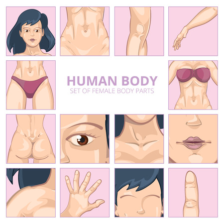 nude girl: Female body parts in cartoon style. Vector icons set. Body girl, human body woman, health body parts illustration