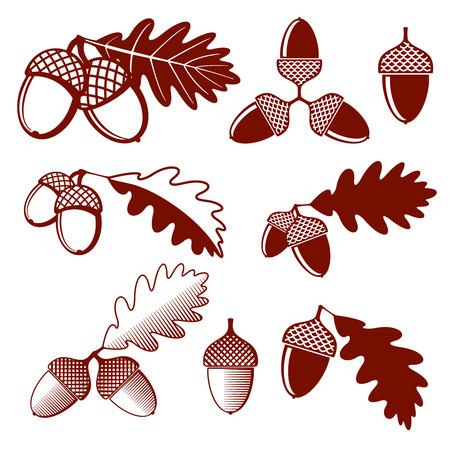 oaken: Oak acorns and leaves vector set. Acorn oak, leaf oak, nature plant oak acorn, design nut acorn illustration