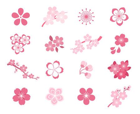 Conjunto de iconos de vector de flor de cerezo sakura japonés. Cereza japonesa de la naturaleza, sakura floral de primavera, sakura de flor en flor, ilustración de sakura de icono