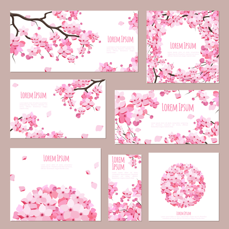 cherry blossom: Greeting cards vector template with blossoming sakura on white