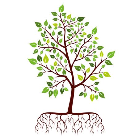 raices de plantas: Árbol con raíces y hojas verdes. Naturaleza rama de la planta. ilustración vectorial Vectores