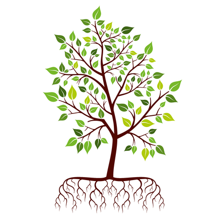 raices de plantas: Tree with roots and green leaves. Nature plant branch. Vector illustration
