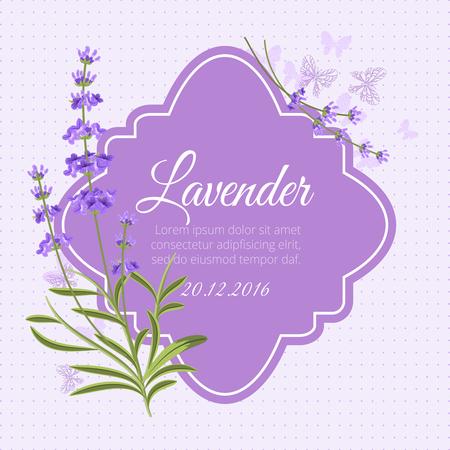 fragrant: Greeting card, invitation vector template with fragrant lavender. Flower greeting, postcard plant blossom illustration