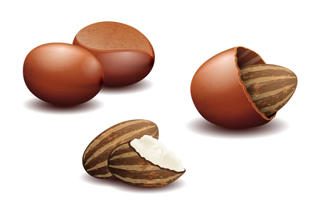 Shea noten en karité boter. Organische natuurlijke bruikbare zaad, illustratie