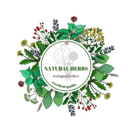 mint leaves: Hand drawn herbs and leaves label. Vector basil and thyme, rosemary and mint. Banner with natural plants illustration Illustration
