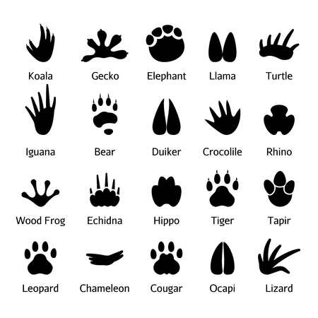 Animal and reptile footprints vector. Set foot prints wild animals, illustration of black silhouette