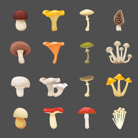 poisonous: Vector mushrooms illustration for menus and recipes. Edible and poisonous food Illustration