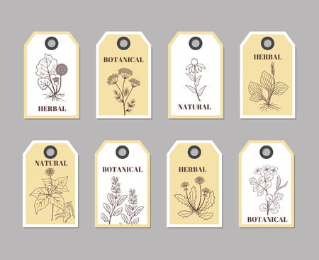 aromatic: Organic herbs labels. Vector tags, collection of labels with sketch plants for natural products and culinary illustration