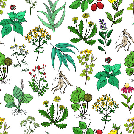 green herbs: Drug plants and medicinal herbs vector background on white. Pattern with green herbs for medicine. Herb and flower for drug illustration Illustration