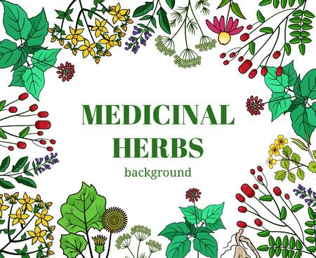 herbes médicinales sauvages illustration de fond. plantes Vector design pour les cosmétiques magasin et salon de beauté. produits biologiques naturelles de soins de santé