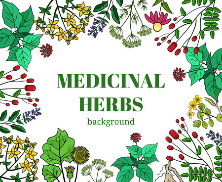 wild herbs: Wild medicinal herbs background illustration. Vector plants design for cosmetics store and beauty salon. Natural organic health care products