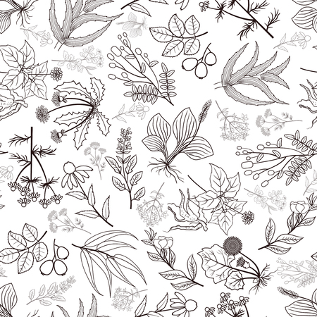 Herb plants background. Vector spices seamless pattern in monochrome style illustration  イラスト・ベクター素材
