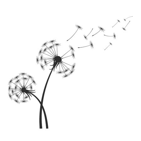 black and white image: Black dandelion silhouette with wind blowing flying seeds isolated on white background. Blossom flower fluffy plant illustration