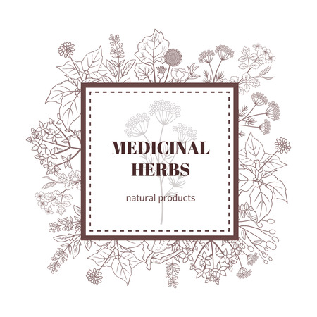 medical drawing: Medicine herbs decorative background. Vector botanical illustration with hand drawn herbs. Medicinal herbs natural products illustration