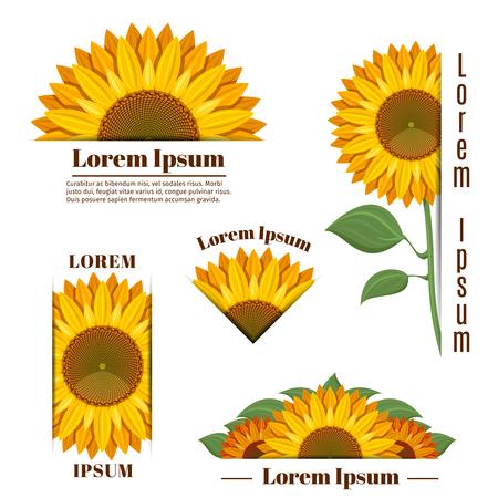 Sun flower: Sonnenblumen-Banner und Vektor gelb Sonnenblumen Etiketten mit Text. Floral Emblem mit Sonnenblume, Abzeichen mit gelben Blume Sonnenblume Illustration Illustration