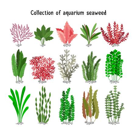 Wodorosty zestaw ilustracji. Żółty i brązowy, czerwony i zielony wodorosty morskie akwarium różnorodności biologicznej na białym. rośliny morskie i glony morskie wodnych