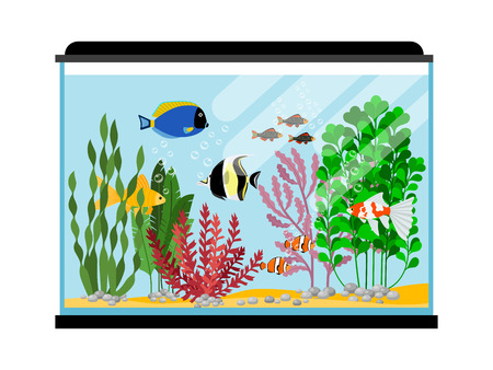 Cartoon fishes in aquarium. Saltwater or freshwater fish tank vector illustration. Water animal goldfish, sea tropical color fish Illustration