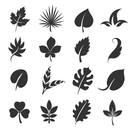 maple tree: Tree leaf silhouettes. Leaves vector illustration isolated on white background. Life organic leaf maple and palm Illustration