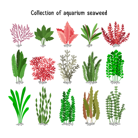 brown: Seaweed set vector illustration. Yellow and brown, red and green aquarium seaweeds biodiversity isolated on white. Sea plants and aquatic marine algae