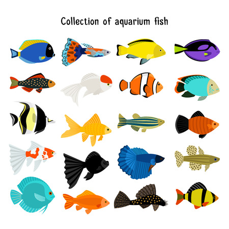 underwater fishes: Aquarium fish set. Vector underwater diving fishes isolated on white background. Color sea animal illustration Illustration