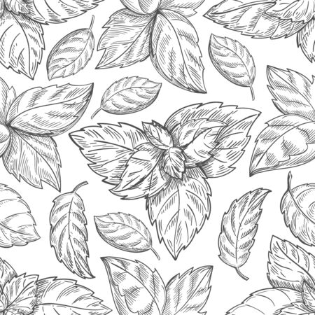 mint leaf: Mint leaf pattern. Peppermint leaves sketch vector background for tea wrapping paper. Organic background with natural leaf illustration Illustration