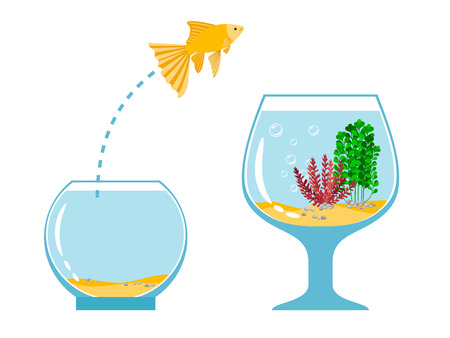 gold fish bowl: Gold fish jumping escape from fishbowl to other aquarium simple vector illustration. Fish pet jump to tank bowl with water Illustration