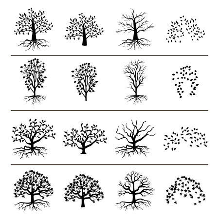 oak: Vector trees with roots, foliage and fallen leaves isolated on white background. Silhouette of tree, and leaf monochrome illustration