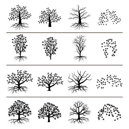 tree: Vector trees with roots, foliage and fallen leaves isolated on white background. Silhouette of tree, and leaf monochrome illustration